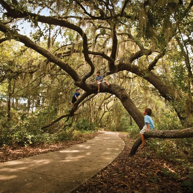 Three kids climbing tree branches over a walking path