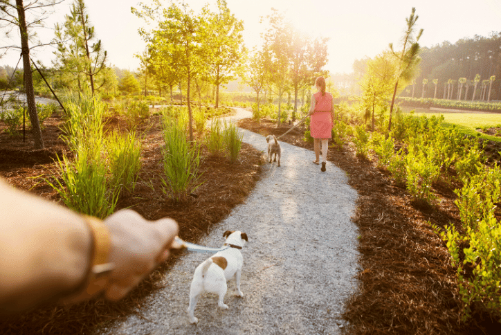 Couple walking their dogs on a path at sunset