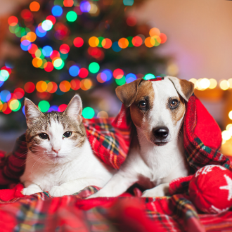 Cat and Dog sitting together in a red tartan blanket with a Christmas tree in the background